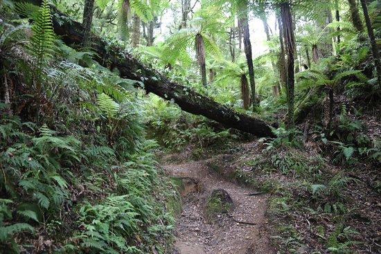 Whirinaki Rainforest Experiences - Day Tours: photo0.jpg