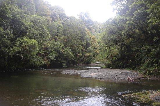 Whirinaki Rainforest Experiences - Day Tours: photo1.jpg