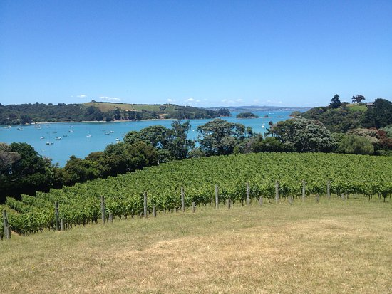 Waiheke-eiland, Nieuw-Zeeland: Goldie Estate vineyard