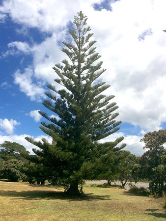 Waiwera, Nya Zeeland: photo2.jpg