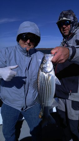 Pottsboro, TX: Typical Striper we cught today, 1 of 12