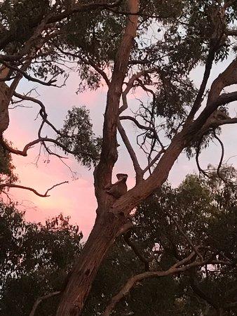 French Island, Australia: photo1.jpg
