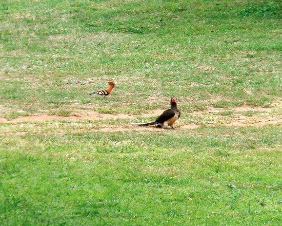 Themba S Birding Eco Tours