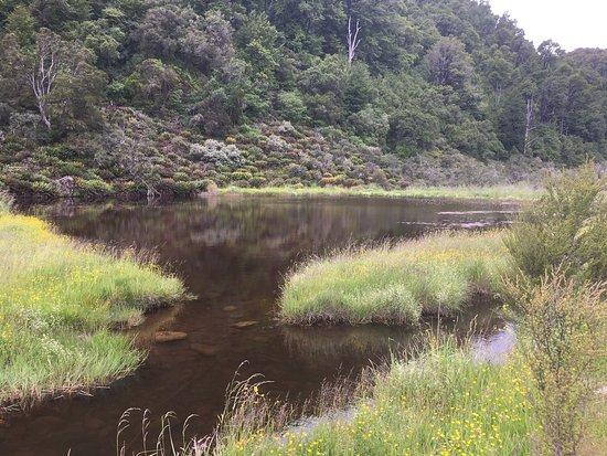 Nelson-Tasman Region, New Zealand: photo2.jpg