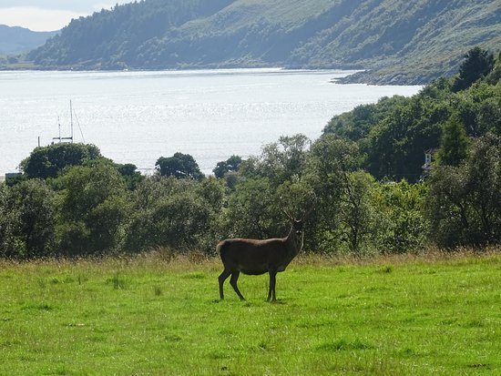 Isle of Jura, UK: Deer at Inverlussa