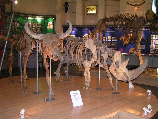 Музей мамонта: музей