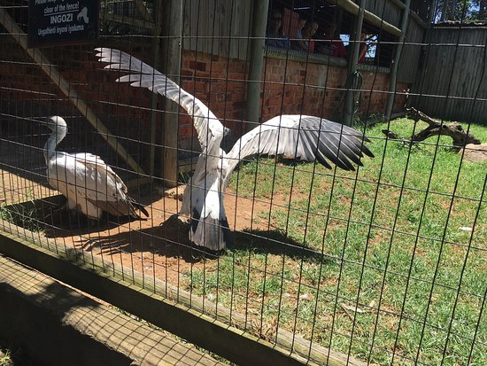 Pietermaritzburg, South Africa: Residents at the sanctuary