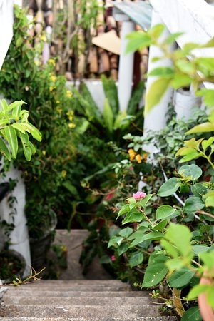 Mama's Galle Fort Roof Cafe: greenery on the rooftop