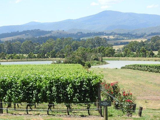 Australian Wine Tour Company: Vines at Domain Chandon