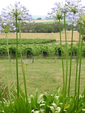 Australian Wine Tour Company: Soumah Winery