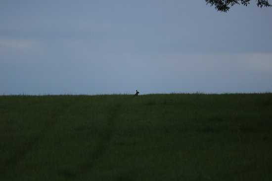 Castle Cary, UK: Spot the rabbit in the field behind Lone Oak!