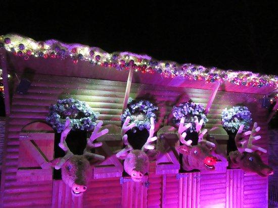 Rufford, UK: Oh the singing reindeer