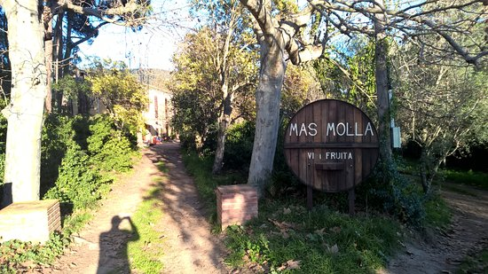 ‪Mas Molla - Traditional Winery‬