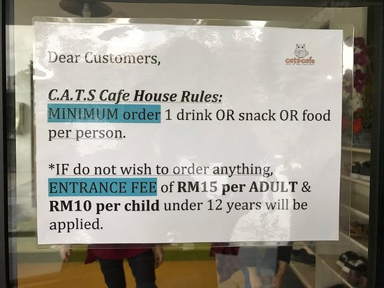 Cats Cafe Jb Review
