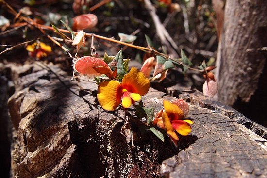 Grampians, Australia: Nice dainty little flowers. I don't know their name.