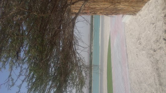 Sir Bani Yas Island, De Forenede Arabiske Emirater: 20161218_144111_large.jpg