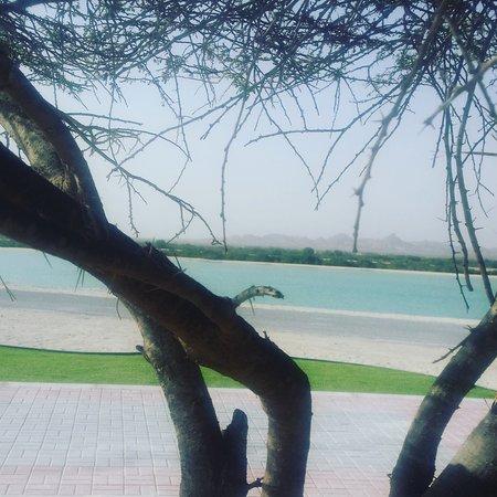 Sir Bani Yas Island, Zjednoczone Emiraty Arabskie: IMG_20161218_145641_large.jpg