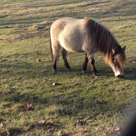 Solvang, CA: Enjoying Grass
