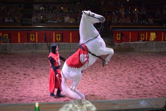 San Miguel de Abona, Spanien: Fantastic horse performance.