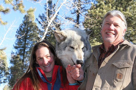 Divide, CO: Steve and Suze feeding cookies to Micah. Photo taken by Colorado Wolf and Wildlife Center.