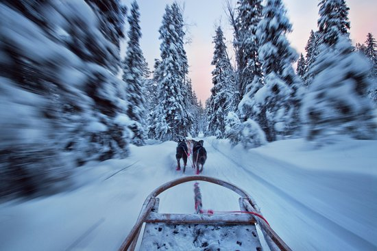 哈士奇雪橇之旅
