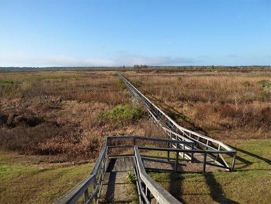 Ocklawaha Prairie Restoration Area