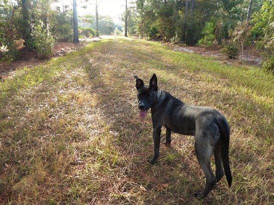 Ocklawaha, FL: Trailmaster Buc