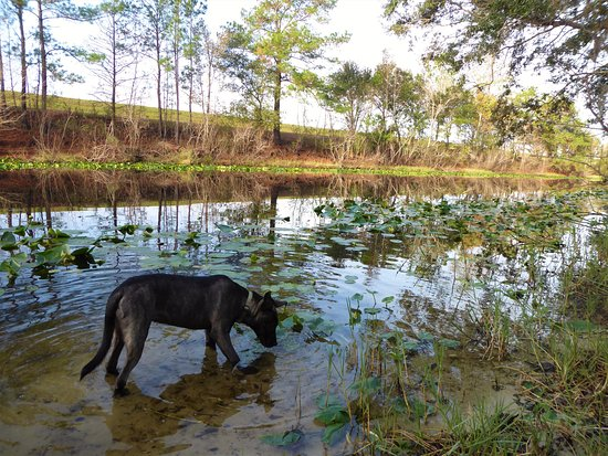 Ocklawaha, FL: Testing the river