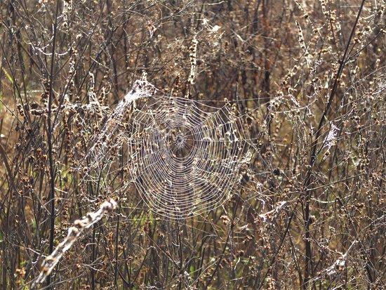 Ocklawaha, ฟลอริด้า: Spider art