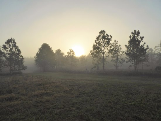 Ocklawaha, FL: Early morning haze