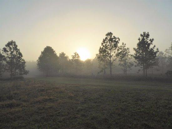 Ocklawaha, ฟลอริด้า: Early morning haze
