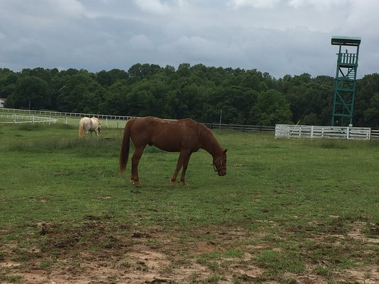 Franklin, KY: Retired Race Horse