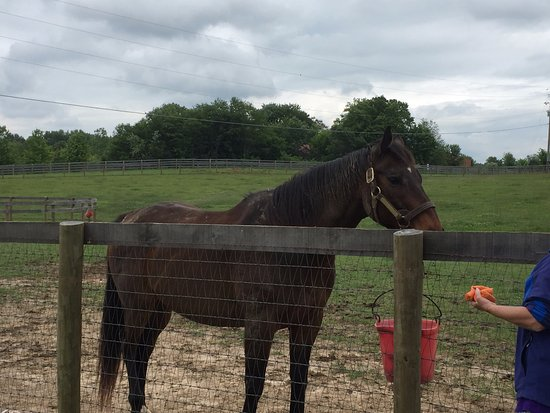 Franklin, Κεντάκι: Retired Race Horse