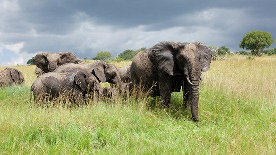 Obectif Tanzania