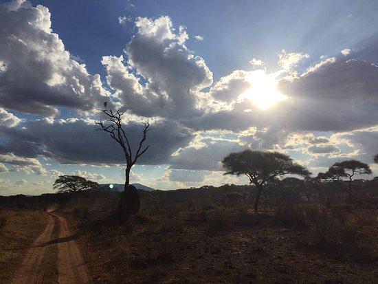 Tarangire Safari Lodge: photo2.jpg
