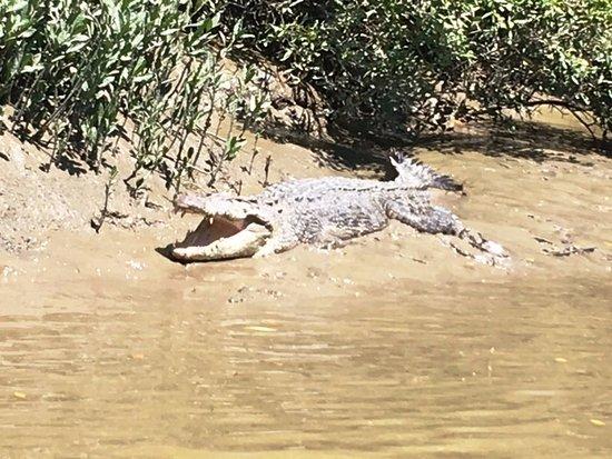 Whitsunday Crocodile Safari: crocodile