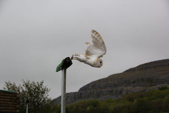 Ballyvaughan, Irlanda: ......