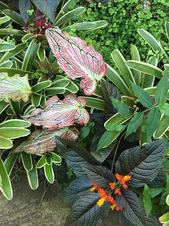 Hunte's Gardens: My recent visit, read my review. Sue lloyd.