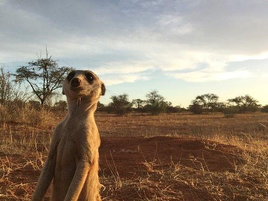 Tswalu Kalahari Game Reserve, South Africa: photo0.jpg