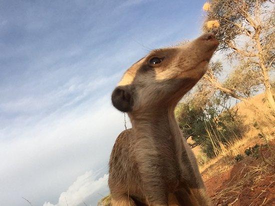 Tswalu Kalahari Game Reserve, South Africa: photo1.jpg