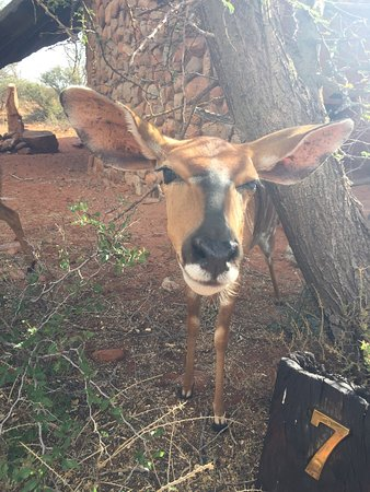 Tswalu Kalahari Game Reserve, Sydafrika: photo2.jpg