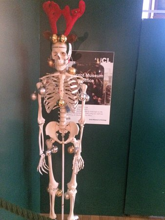 Christmas Skeleton.Christmas Skeleton Picture Of Grant Museum Of Zoology
