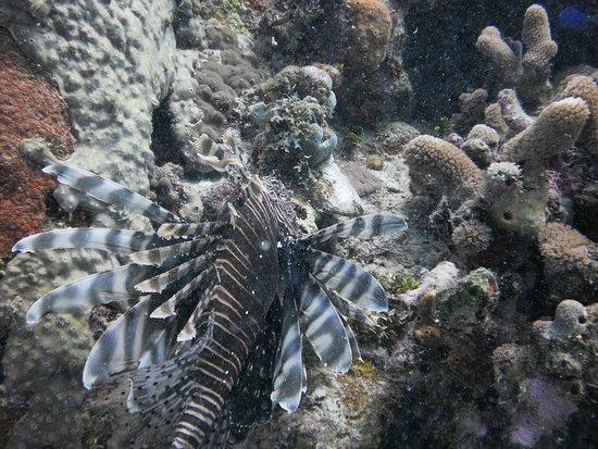 Bayahibe, สาธารณรัฐโดมินิกัน: LionFish