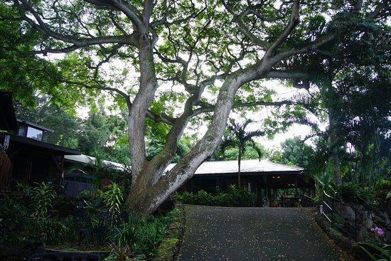 Foto Hale Maluhia Country Inn