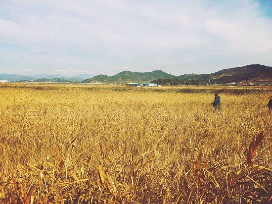 Suncheon, Corea del Sur: photo4.jpg
