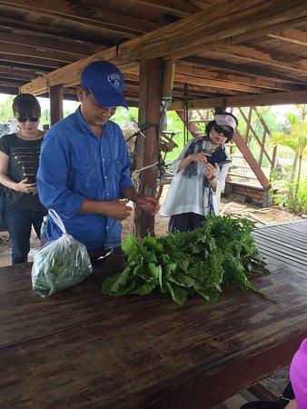 Farm tour followed by great food