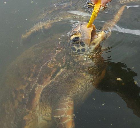 Swimming with Turtles: 20161226_202039_large.jpg