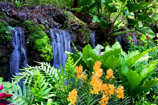 Singapore Botanic Gardens: Orchid Gardens.
