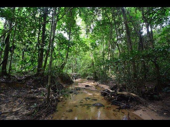 Kedah, Malezja: photo7.jpg