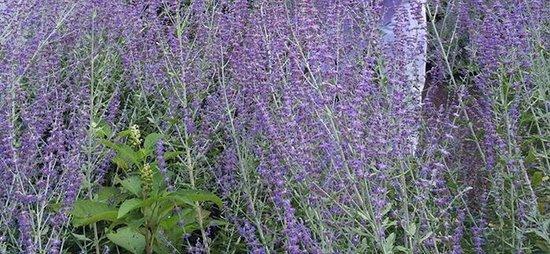 Morris Arboretum: photo4.jpg